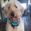 Dog Bandana on a dog-10 dollars-FMB Community Foundation