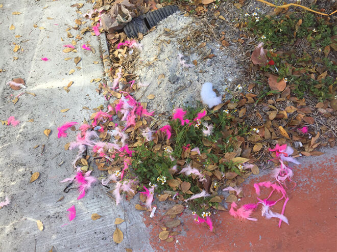 remnants of fmb community foundation pink flamingos